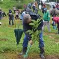 В Эфиопии посадили 350 миллионов деревьев за один день
