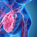 Новый ИИ-диагност способен выявить недостаточность по единственному удару сердца
