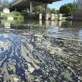 Загрязнение воды затронуло реки по всей Европе